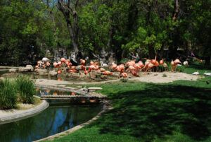 AOC Zoo, Ankara
